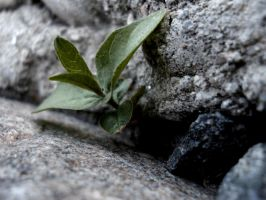 How small  And Green by TheTaier