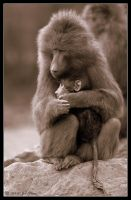 Baboon and Baby by lomoboy