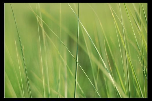 Green by gilad