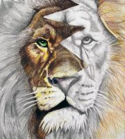 Lion Brothers by artlover2342
