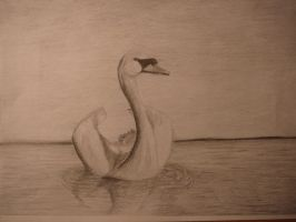Swan~ by Grayes