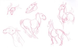 A Horse Study. by Iulie-O
