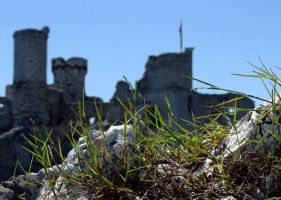 even more of stone grass.. by kretka