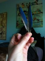 Green Cheek Conure Primary Feathers by Antlertine