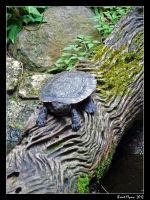 Turtle on a Log by DarthIndy