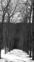 Allee d'arbres by thauzar