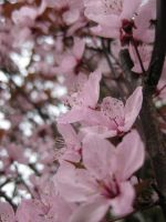 Blossom by waterdrup
