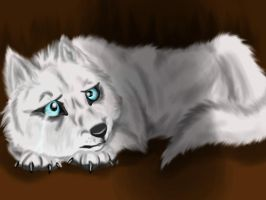 White Wolf With The Blue Eyes OLD by Taunii