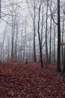 Foggy Forest 03 by sacral-stock
