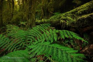 Fern Gully Delight by DrewHopper