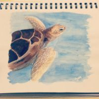Watercolour Turtle by Narniakid