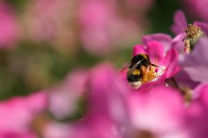 Pink and Yellow by SantiBilly