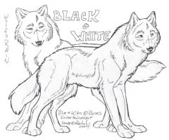 Wolf's Rain: Black and White by NightTracker