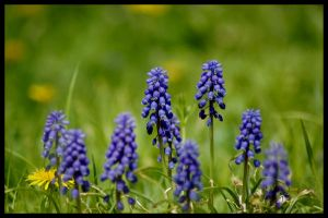 Blue Bells by Ashz