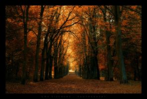 Chestnut avenue by Crossie