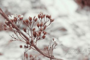 Day Twenty-Seven - Winter's Breath by Ashqtara