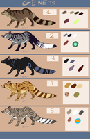 Genets adoptables OPEN by creative-adoptions