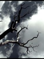 Tree.III by Lec3H-All