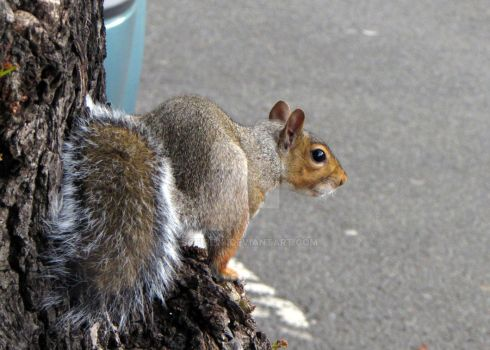 Squirrel by sofire28