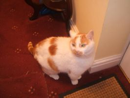 Buster, the fat cat pic 1 by Guardian-of-Azarath