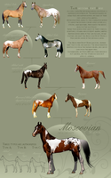 Moscovian Sport Horse Bloodline by BH-Stables