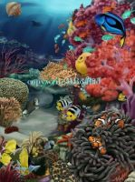 Coral reef by MBoulad