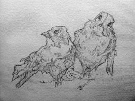Birds by perfectionist-pencil