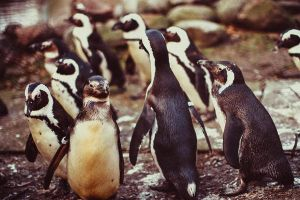 penguins by Satine747