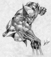 Wolverine by maximum2