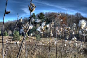 Fall HDR by Shouldofducked