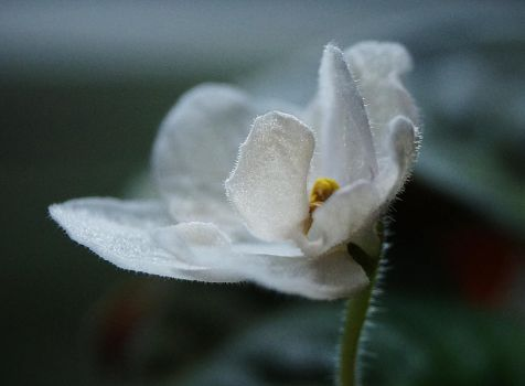 Pale White by Lina-Poe