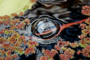 Photo in a Bubble by annuhaftermath