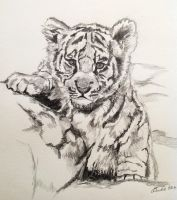 Baby Tiger by carlyscanvas