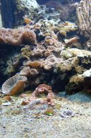 Aquarium Stock 49 by Malleni-Stock