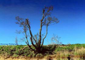 Lincluden - Reflections on a Tree by Okavanga