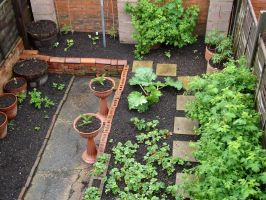 Part of my little garden by Thelma1