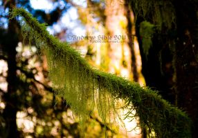Mossy Limb by Figit090
