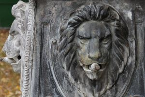 Lion by bojar