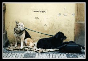 Citydogs by declaudi