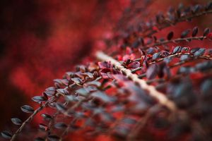 Red Red Autumn III by JoannaRzeznikowska