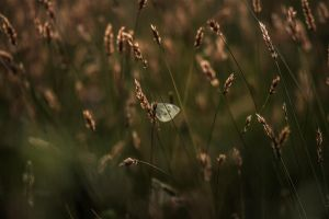 Transparency by ScottJWyatt