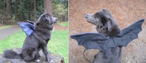 Doggie Wings - Otis' Halloween Costume by Skylanth