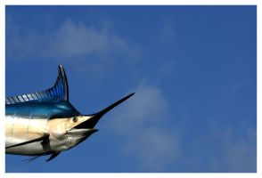 Flying Fish by JacquiJax