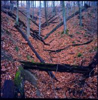 Leaf strewn ravine, wide shot by harrietsfriend
