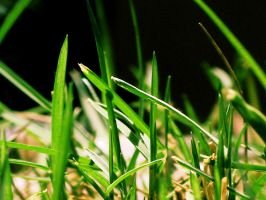 Epic Grass by jlgm25