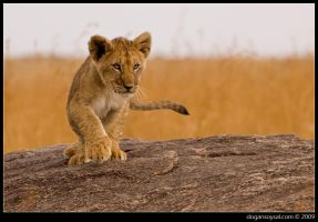 CUBS - I by dogansoysal