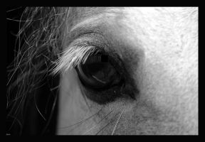 Horse Eye . by Nattacia