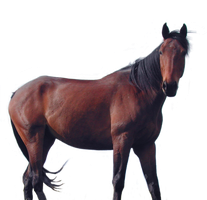 Horse1 PNG stock by lubman