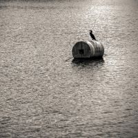 The Silhouette of the Cormorant by Kyle197