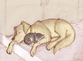 A Sweet Afternoon Nap by Isaia